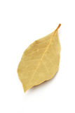 Bay leaves Royalty Free Stock Images