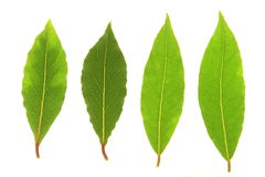 Bay leaves. Against a white background Stock Images