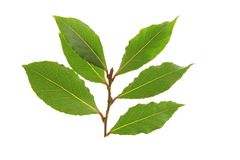 Bay leaves. Against a white background Stock Photos