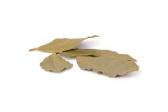 Bay leaves. Dry bay leaves on white background royalty free stock images