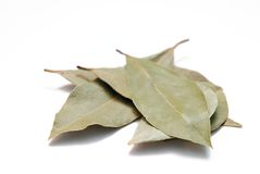 Bay Leaves. Piled bay leaves isolated on white background Stock Photos