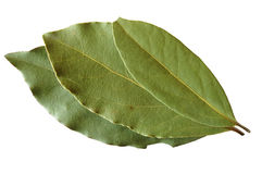 Bay leaves Stock Photos