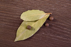 Bay leaves and allspice. Two bay leaves and allspice royalty free stock photo