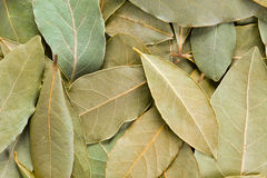 Bay Leaves background. Royalty Free Stock Photos