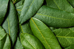 Bay Leaves Background Stock Photos