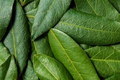 Bay Leaves Background. Bay leaves, full-frame background Stock Photos