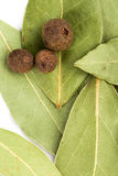 Bay leaves and black pepper Royalty Free Stock Image