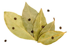 Bay leaves and black peppercorns Royalty Free Stock Image