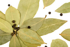 Bay leaves and black peppercorns Stock Images