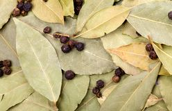 Bay leaves and black peppercorns Stock Image