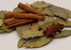 Bay leaves, cinnamon and star anise Royalty Free Stock Images