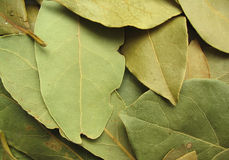 Bay leaves close-up #2.  royalty free stock image