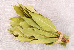 Bay leaves Stock Image