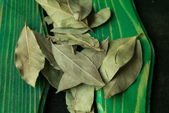 Bay leaves. Closeup on colored wood background royalty free stock image