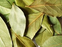 Bay leaves for cooking Stock Photos