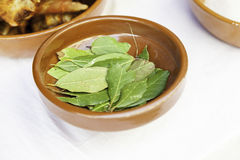 Bay leaves for cooking Royalty Free Stock Photos