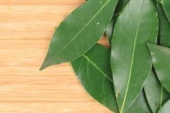 Bay leaves. Stock Photos