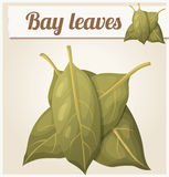 Bay leaves. Detailed Vector Icon Royalty Free Stock Image