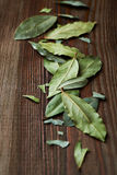 Bay Leaves Stock Photo