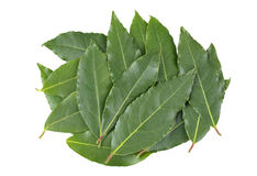 Bay leaves. Fresh picked Bay or Bay Laurel leaves used in cooking as an ingredient to flavor food Stock Photos