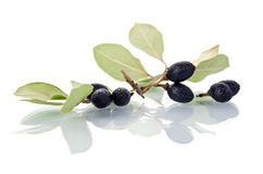 Bay leaves with fruits. Over the whte Stock Photos