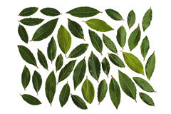 Bay Leaves green Stock Photo