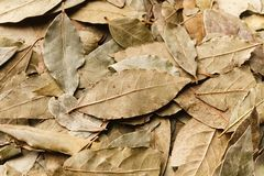 Bay leaves, green natural background, top view stock photos