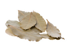 Bay Leaves Isolated Stock Photos