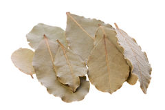 Bay Leaves Isolated Stock Photography