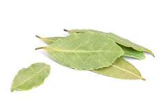 Bay Leaves isolated on white background. Royalty Free Stock Images