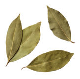 Bay leaves. Isolated on white background Royalty Free Stock Images