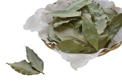 Bay Leaves. Isolated on White Background Royalty Free Stock Photos