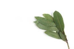 Bay Leaves. Laurus Nobilis Royalty Free Stock Photo