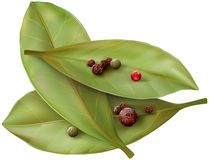 Bay leaves and pepper Stock Images