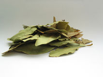 Bay leaves pile Royalty Free Stock Images