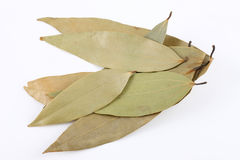 Bay leaves pile Stock Image