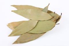 Bay leaves pile. On white background stock image
