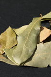 Bay leaves slate. Royalty Free Stock Images