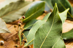 Bay leaves. Soft focus Royalty Free Stock Photo