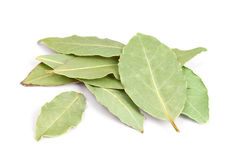 Bay Leaves  on white background. Royalty Free Stock Image