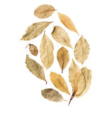 Bay leaves  on white background.  Royalty Free Stock Photos