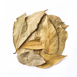 Bay leaves  on white background.  Royalty Free Stock Photo