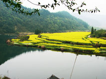 The bay of moon. This is a bay at the wuyuan.All the cole bloom Royalty Free Stock Image