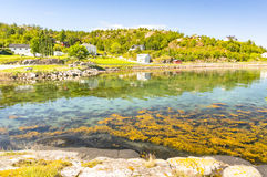 Bay on the Norwegian countryside, rural houses on the coast. Kongensvoll Hitra, Norway - August 19, 2016:  Beach and shallow bay of Norwegian fjord. Brown algae Royalty Free Stock Photography