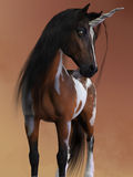 Bay Pinto Unicorn. A bay pinto unicorn has the small body and fine features of the Arabian horse breed Stock Image