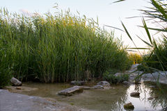 The bay in reeds, a path of stones. The bay in reeds, a path,  stones Stock Photography