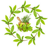 Bay and Rosemary Herbs Royalty Free Stock Photography
