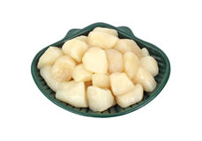 Bay Scallops in Dish Royalty Free Stock Photo
