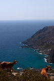 Bay sea, goat, Lissos, Crete Greece Royalty Free Stock Photos