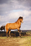 Bay stallion in autumn Stock Image